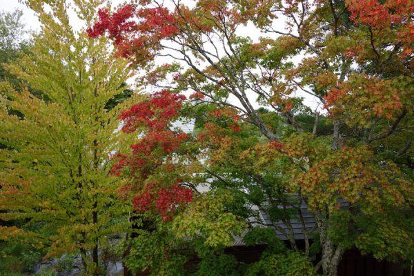 ヴァンブランの紅葉
