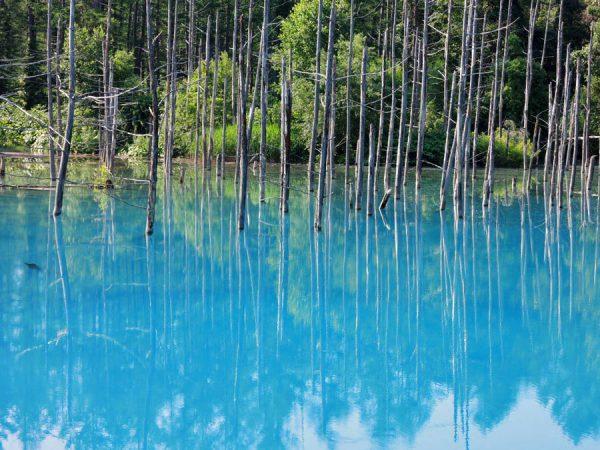 美瑛町、青の池