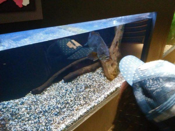 いなわしろカワセミ水族館
