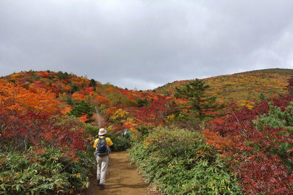 安達太良の紅葉真っ盛り