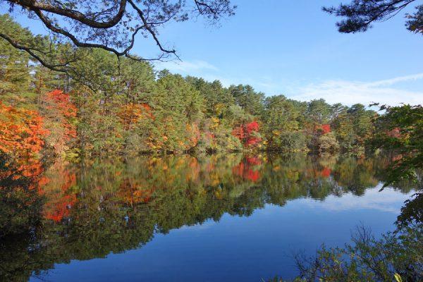 柳沼の紅葉