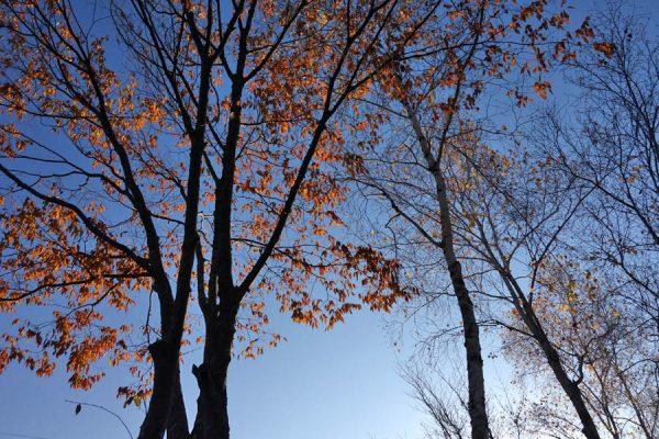 庭の落ち葉