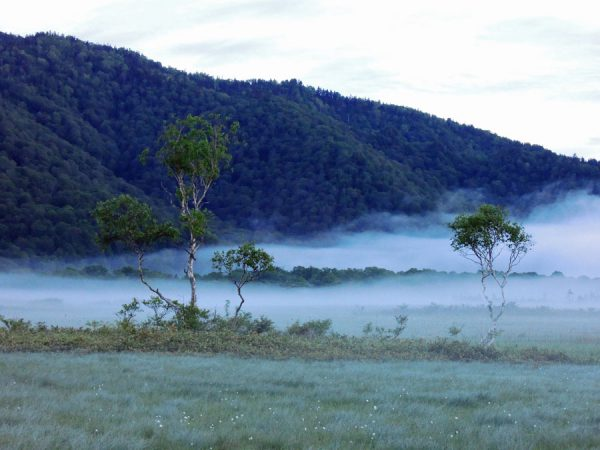尾瀬ヶ原の朝靄