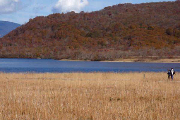 雄国沼の草紅葉