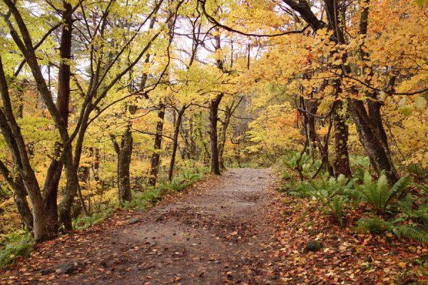 五色沼散策路の紅葉