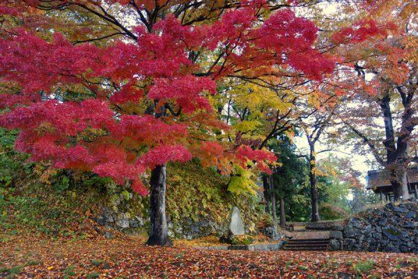 亀ヶ城跡の紅葉