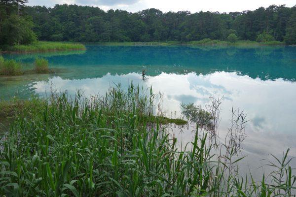 新緑の頃の五色沼