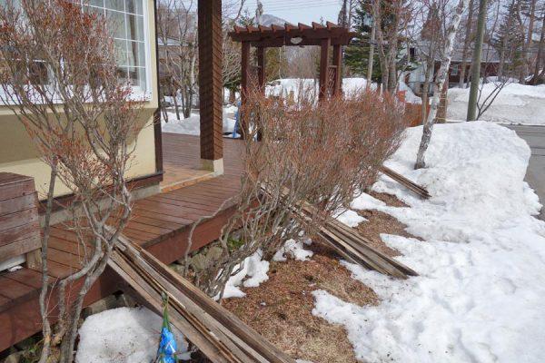 雪囲い撤去