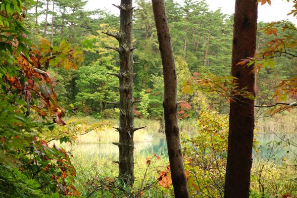 弁天沼の紅葉