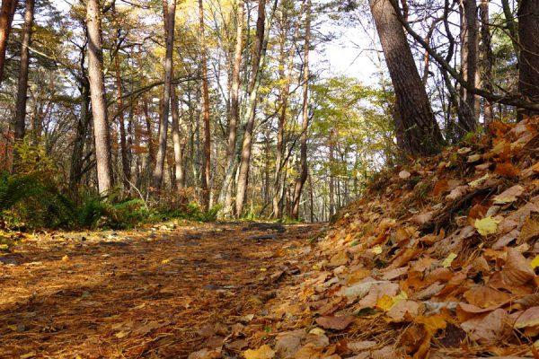 五色沼散策路の落葉