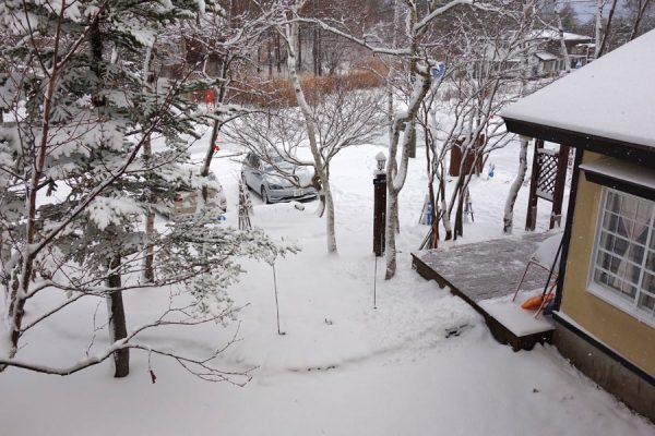 雪降りましたが、