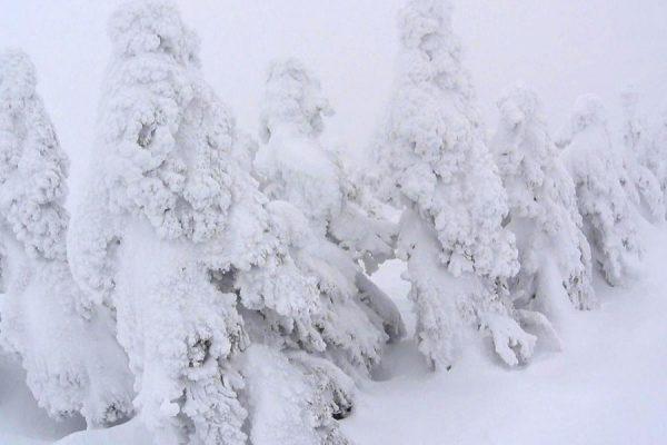西大巓の樹氷