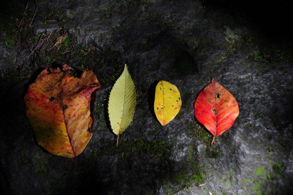 五色沼の落ち葉