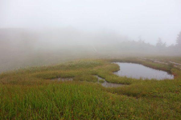 中門岳手前の池塘