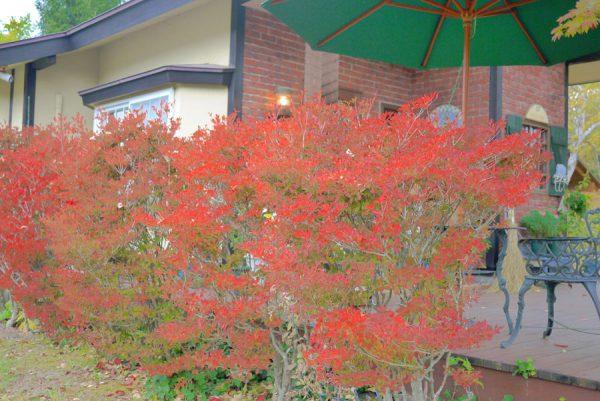 ペンションヴァンブランの紅葉