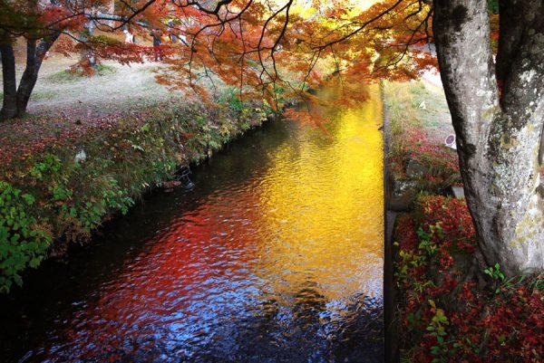 夕日に輝く紅葉