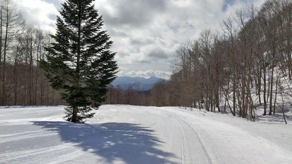 今日のグランデコスキー場